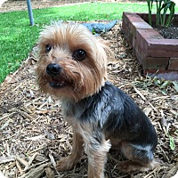 Adopt A Pet :: Princie - Leesburg, FL