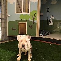 Adopt A Pet :: Bailey - West Hills, CA