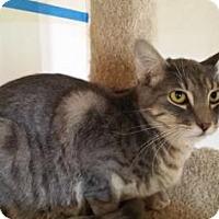 Adopt A Pet :: Gibbs - Tucson, AZ