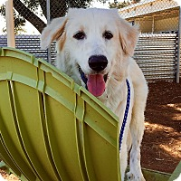 Adopt A Pet :: Fabio - Kyle, TX