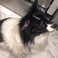 Adopt A Pet :: Maddy (age 8) in GA - Marietta, GA