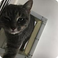 Adopt A Pet :: Tatiana - Cumming, GA