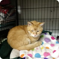 Adopt A Pet :: Hunter - North Kingstown, RI