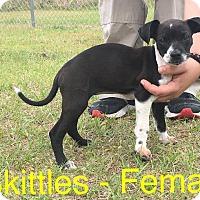 Adopt A Pet :: Skittles - Waycross, GA