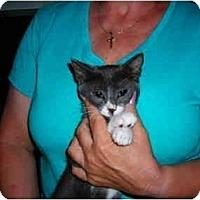 Adopt A Pet :: Princess - Riverside, RI