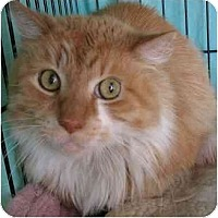 Adopt A Pet :: Paul - Plainville, MA