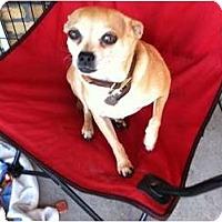 Adopt A Pet :: Mad Max - North Hollywood, CA
