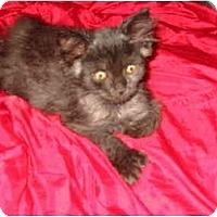 Adopt A Pet :: Tom Thumb (and Dora) - Syracuse, NY