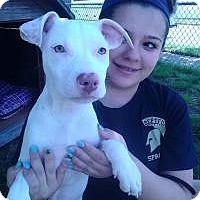 Adopt A Pet :: Paris - Marlton, NJ