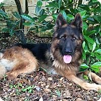 Adopt A Pet :: Arturo - Pompano Beach, FL