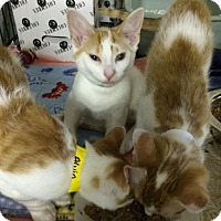 Adopt A Pet :: Smirnoff - Byron Center, MI