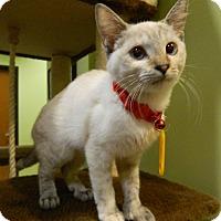 Adopt A Pet :: Capri - The Colony, TX