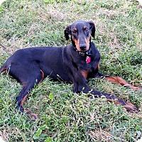 Adopt A Pet :: Hans--pending - New Richmond, OH