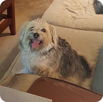 Terrier (Unknown Type, Medium) Mix Dog for adoption in Greensboro, Maryland - Zelda
