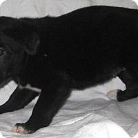 Adopt A Pet :: Lois - Pilot Point, TX