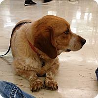 Adopt A Pet :: Buster - Saint Clair, MO