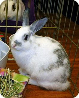 Dwarf Mix for adoption in North Gower, Ontario - Clara