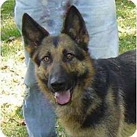 Adopt A Pet :: Belle - Pike Road, AL