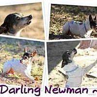 Adopt A Pet :: NEWMAN - Bryan, TX