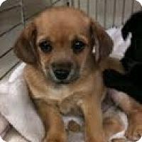Adopt A Pet :: Prince - Modesto, CA
