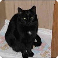 Adopt A Pet :: Ashlee - North Boston, NY