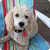 Adopt A Pet :: Pierre - San Jose, CA