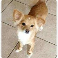 Adopt A Pet :: Sandy - Lake Forest, CA