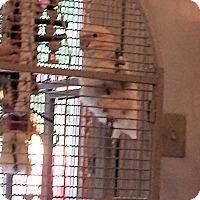 Adopt A Pet :: Sammy - Lexington, GA