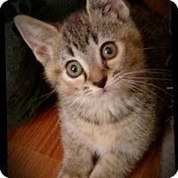 Adopt A Pet :: Frankie - Richmond, VA