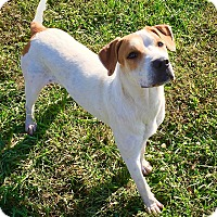 Adopt A Pet :: Devin - Russellville, KY