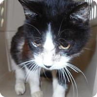 Adopt A Pet :: Kecie - Waupaca, WI