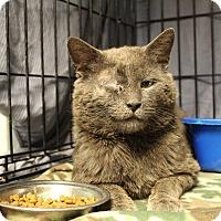 Adopt A Pet :: Lucas - Warwick, RI