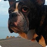 Adopt A Pet :: Sir Henry - Elyria, OH