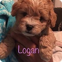 Adopt A Pet :: Logan - Brea, CA