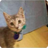 Adopt A Pet :: Caren - Orlando, FL