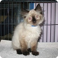 Adopt A Pet :: Bobby - Shelton, WA