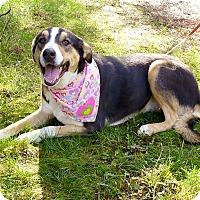Adopt A Pet :: Sasha best dog - Sacramento, CA