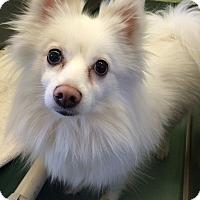 Adopt A Pet :: Chloe - New York, NY