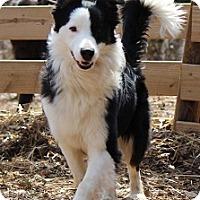 Adopt A Pet :: Fynn - Oliver Springs, TN