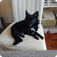 Adopt A Pet :: Gepetto - West Deptford, NJ
