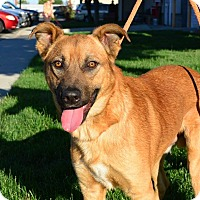 Adopt A Pet :: Cesar - Meridian, ID