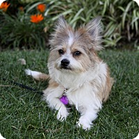 Adopt A Pet :: WALKER - Newport Beach, CA