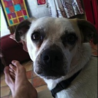 Adopt A Pet :: Frankie / Courtesy Posting - Tucson, AZ