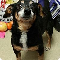 Adopt A Pet :: Peter - Lisbon, OH