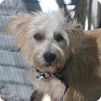 Adopt A Pet :: Squirrel - Norwalk, CT