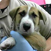 Adopt A Pet :: URGENT 4/21 @ DEVORE - San Bernardino, CA