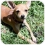 Photo 1 - Chihuahua Mix Puppy for adoption in AUSTIN, Texas - VALENTINA