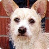 Adopt A Pet :: OWEN (video) - Los Angeles, CA