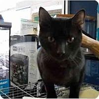 Adopt A Pet :: Hershey - Washington Terrace, UT