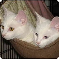 Adopt A Pet :: Princess & Hobo - Chesapeake, VA